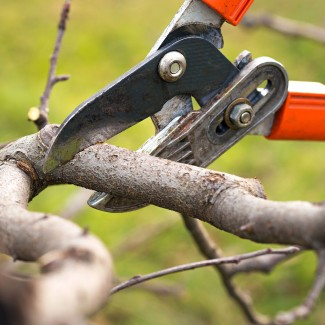 Dormant Pruning photo