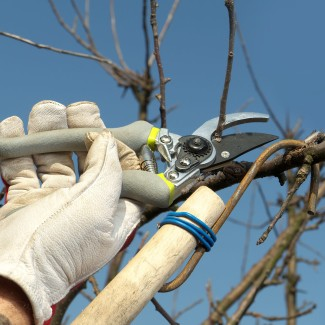 Seasonal Tree & Shrub Pruning photo